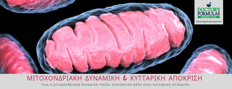 Μιτοχονδριακή Δυναμική & Κυτταρική Απόκριση
